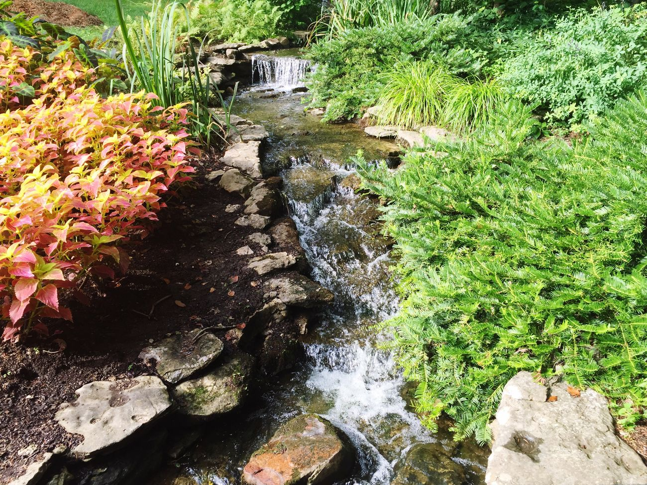 Showcase July Stream Beautiful Nature Flowers Flowers,Plants & Garden Check This Out Nice