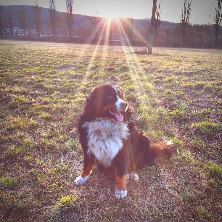 Dog Sunset Nature Photography Rise And Shine Sitting In Grass No Movement Design Poetic Lovely Lovelynatureshots