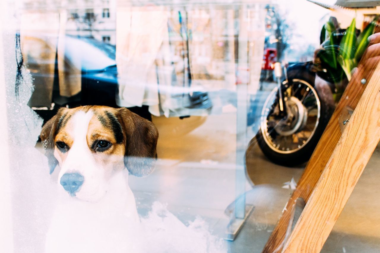 Beautiful stock photos of window, Animal Themes, Anticipation, Contemplation, Day
