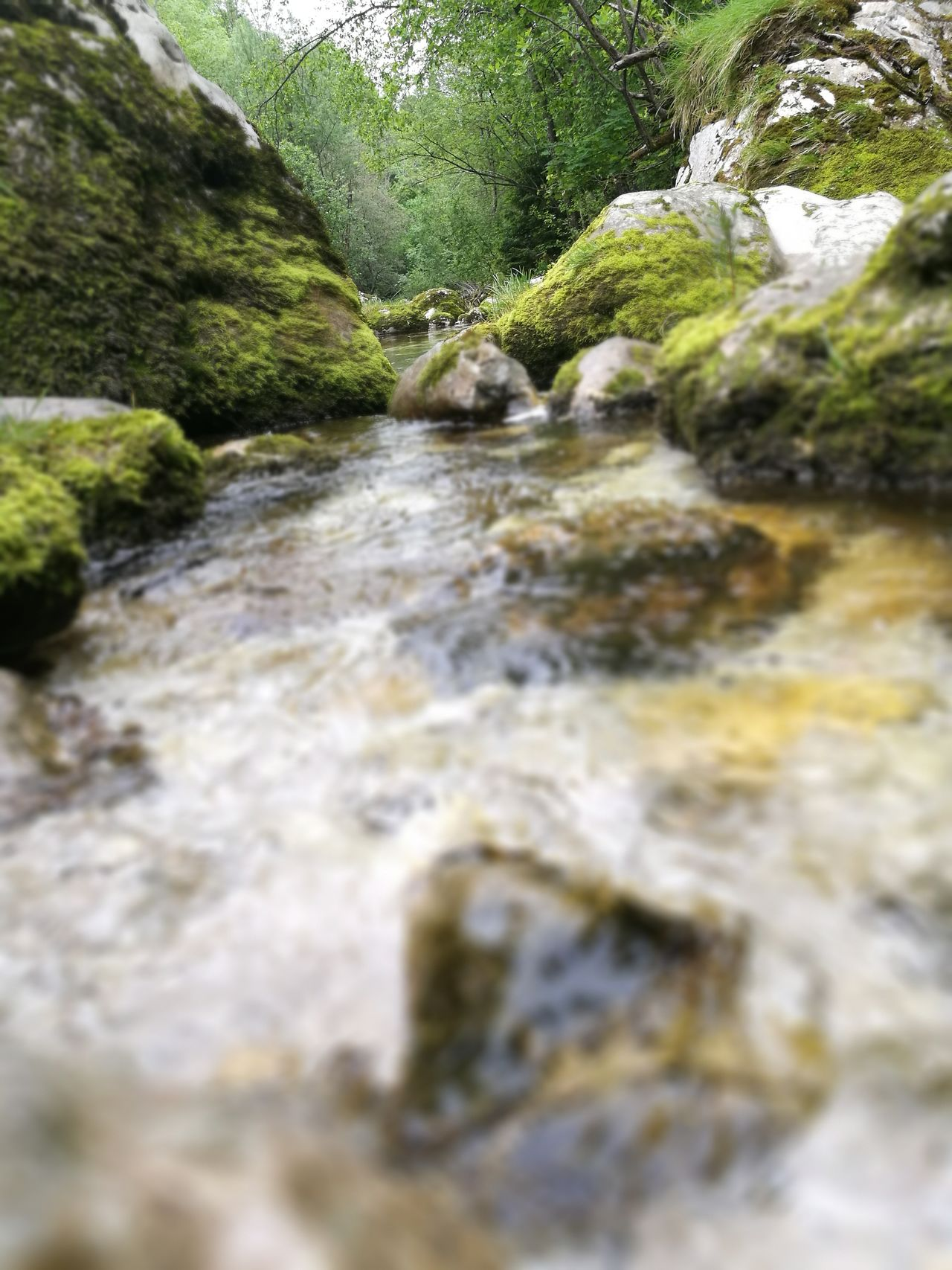Water Rock - Object Nature Moss Outdoors Beauty In Nature Day River No People Tranquility Waterfall Scenics Forest Tree Close-up Wet Rocks Clean River Fast River The Great Outdoors - 2017 EyeEm Awards Focus On Background The Purist (no Edit, No Filter)