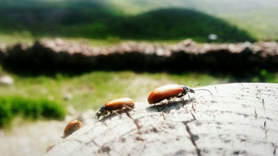 Bugs Sun ☀ Sunny Day Sunshine Walking Around Bug Farm Life