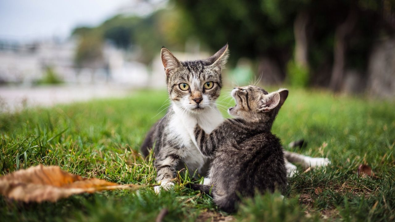 Beautiful stock photos of kitty, Animal Family, Animals Hunting, Cat, Day