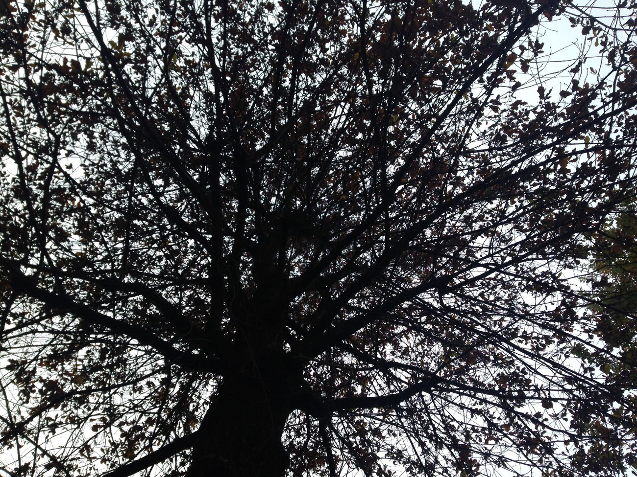 Beauty In Nature Auntumn Tree 🍃🍁