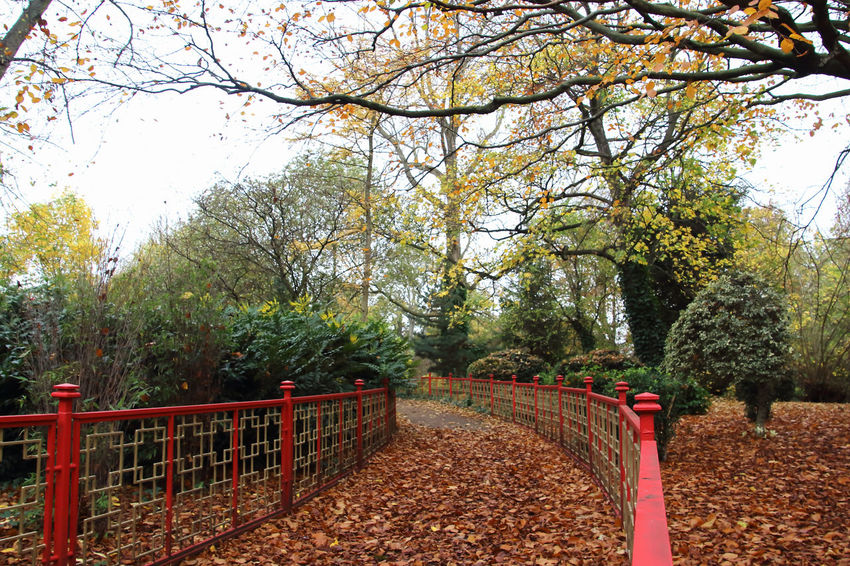 A local park in England in the summertime Autumn🍁🍁🍁 Blue Cloudy Sky Bushes With Fresh Green Leaves Countryside Uk Daytime Flowers, Nature And Beauty Grass Leaves On The Ground Outside Photography Park Rural Scene Trees Wrought Iron Design