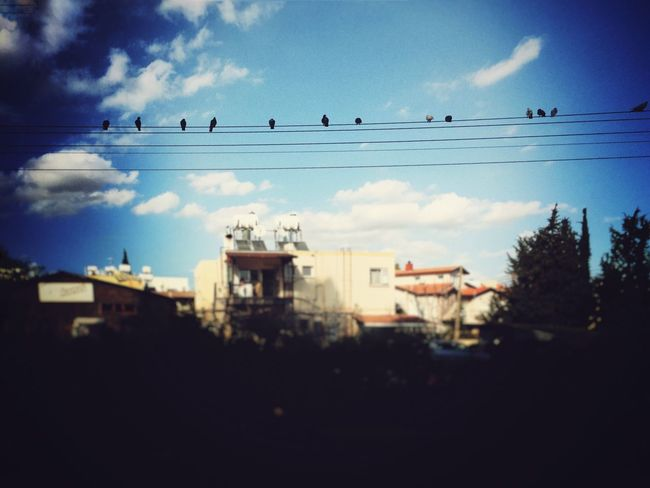 Free Birds Nature