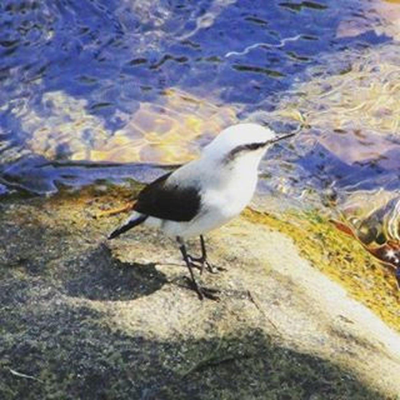 Bom dia! 🏞🐦🌞 Fotografando Porai Passaro Rio Riodejaneiro Cachoeira Orioelindodemais Amomuito Natureza Boasvibracoes Bomdia Buenosdias Goodmorning Love Nature MiHogar Meulugar MinhaCidade Guapimirim Caminhadamatinal