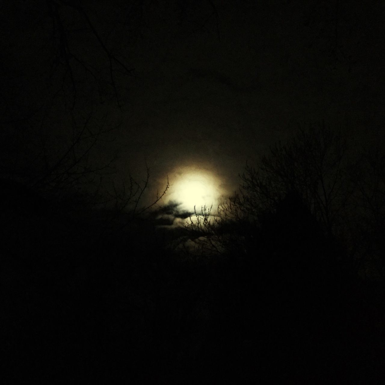 Silhouette Nature Dark Branch No People Tranquility Beauty In Nature Outdoors Sky Night Full Moon Night  Eye Em New Here Full Moon 🌕