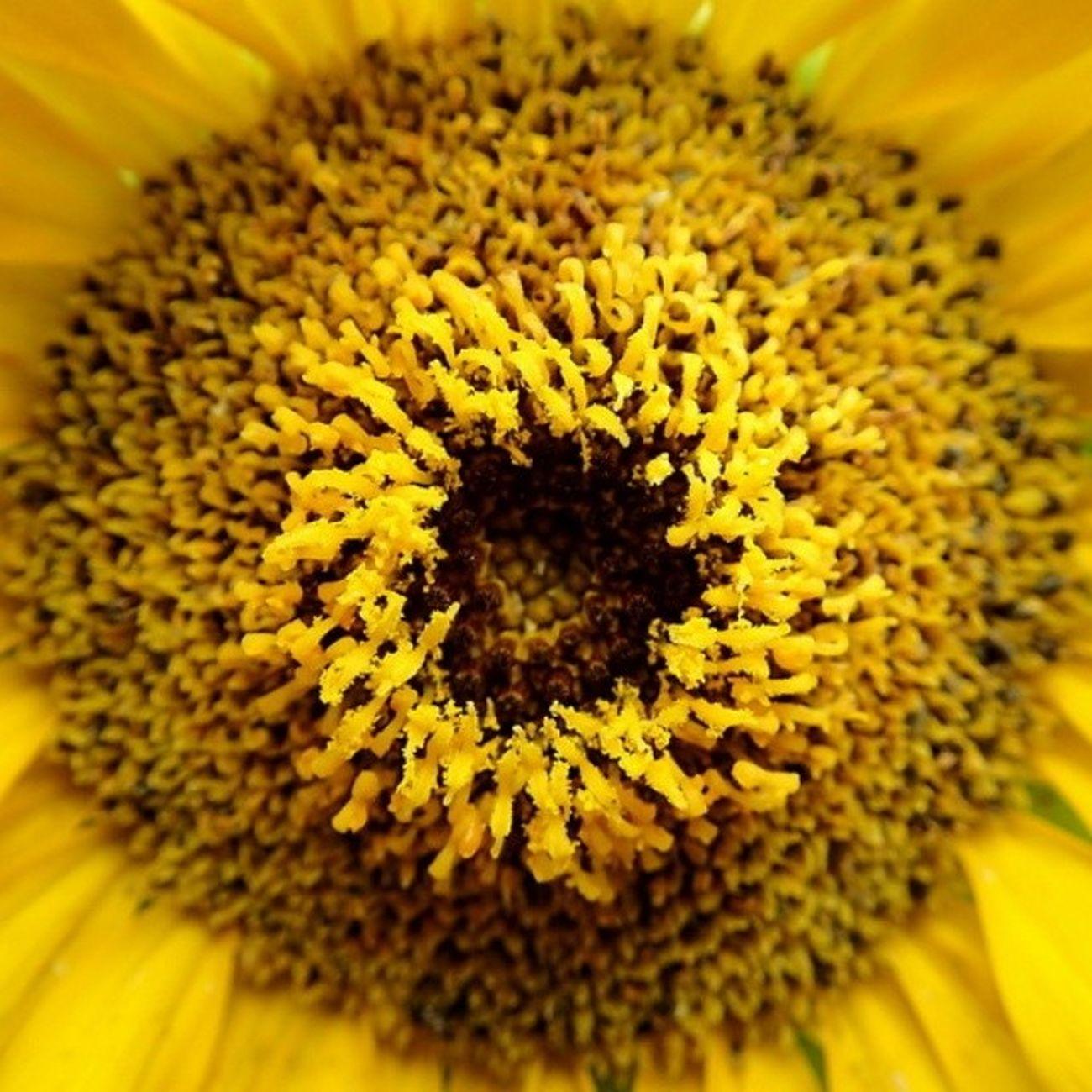 Macro Yellow Floral Naturelovers WeLoveNature  Flowerlovers Floral_lover Flowers Nature Flower Flora