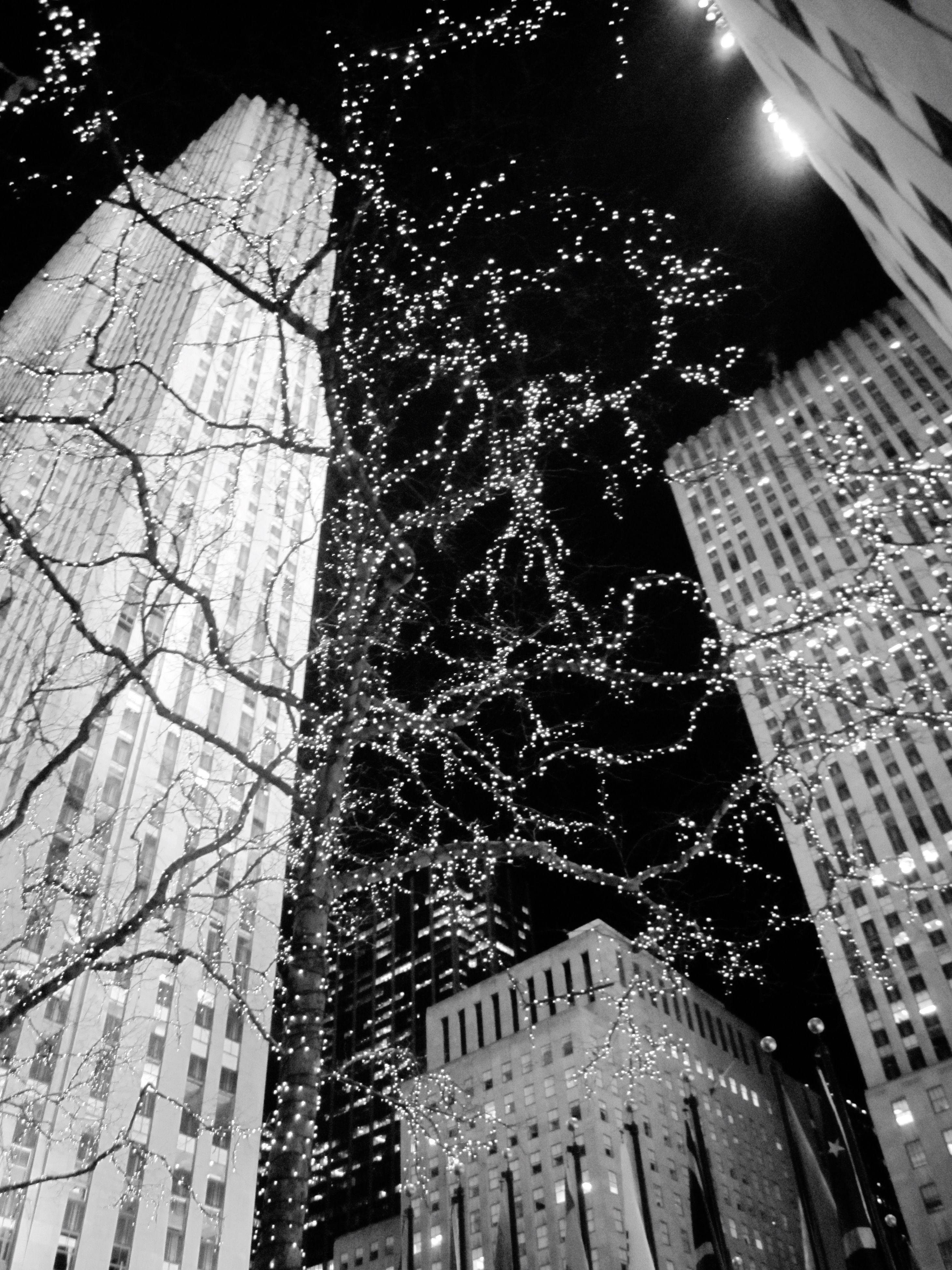 low angle view, building exterior, architecture, built structure, night, city, illuminated, building, tree, tall - high, outdoors, branch, no people, sky, bare tree, modern, window, tower, lighting equipment