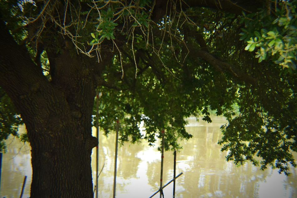 By the bayou Beauty In Nature No People South Louisiana Trees Greenery Water Water Reflections Tree Trees Collection Tre