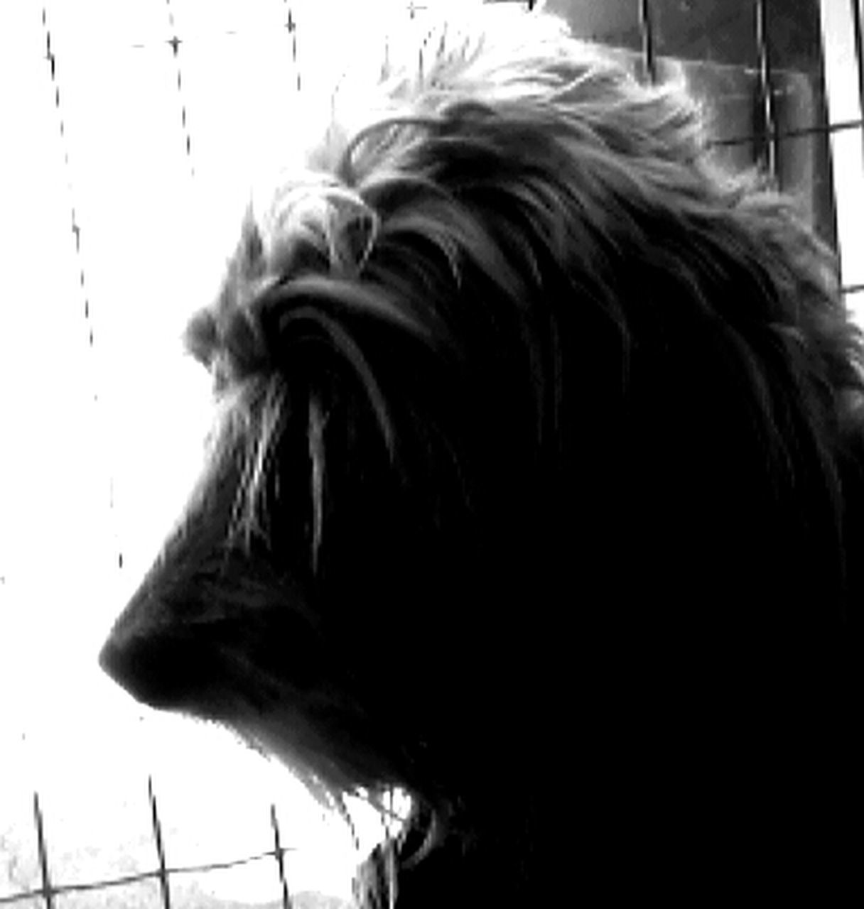 one animal, dog, animal themes, domestic animals, pets, close-up, mammal, day, no people, indoors