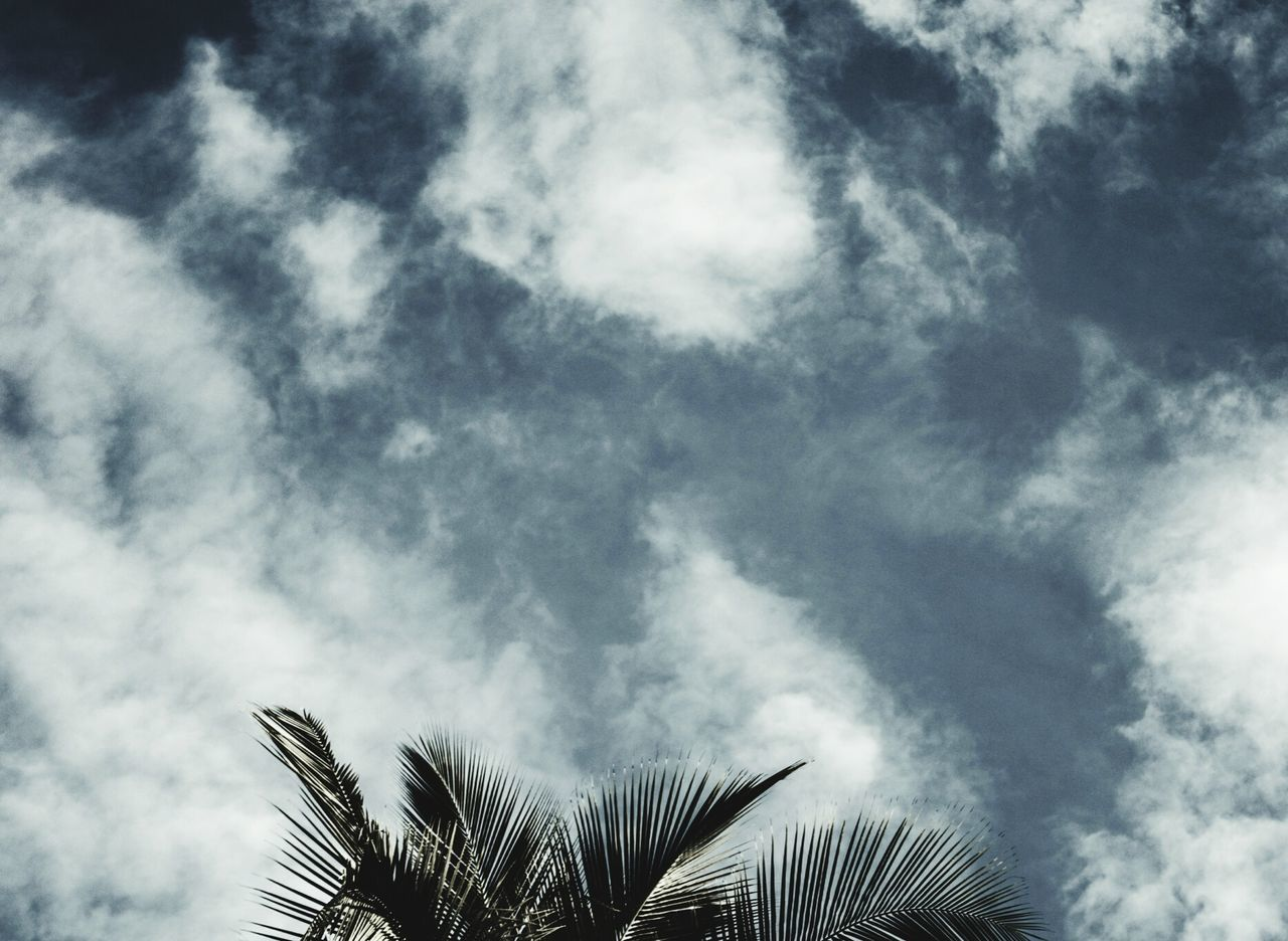 palm tree, low angle view, nature, beauty in nature, growth, day, no people, palm frond, outdoors, cloud - sky, sky, scenics, tree, close-up