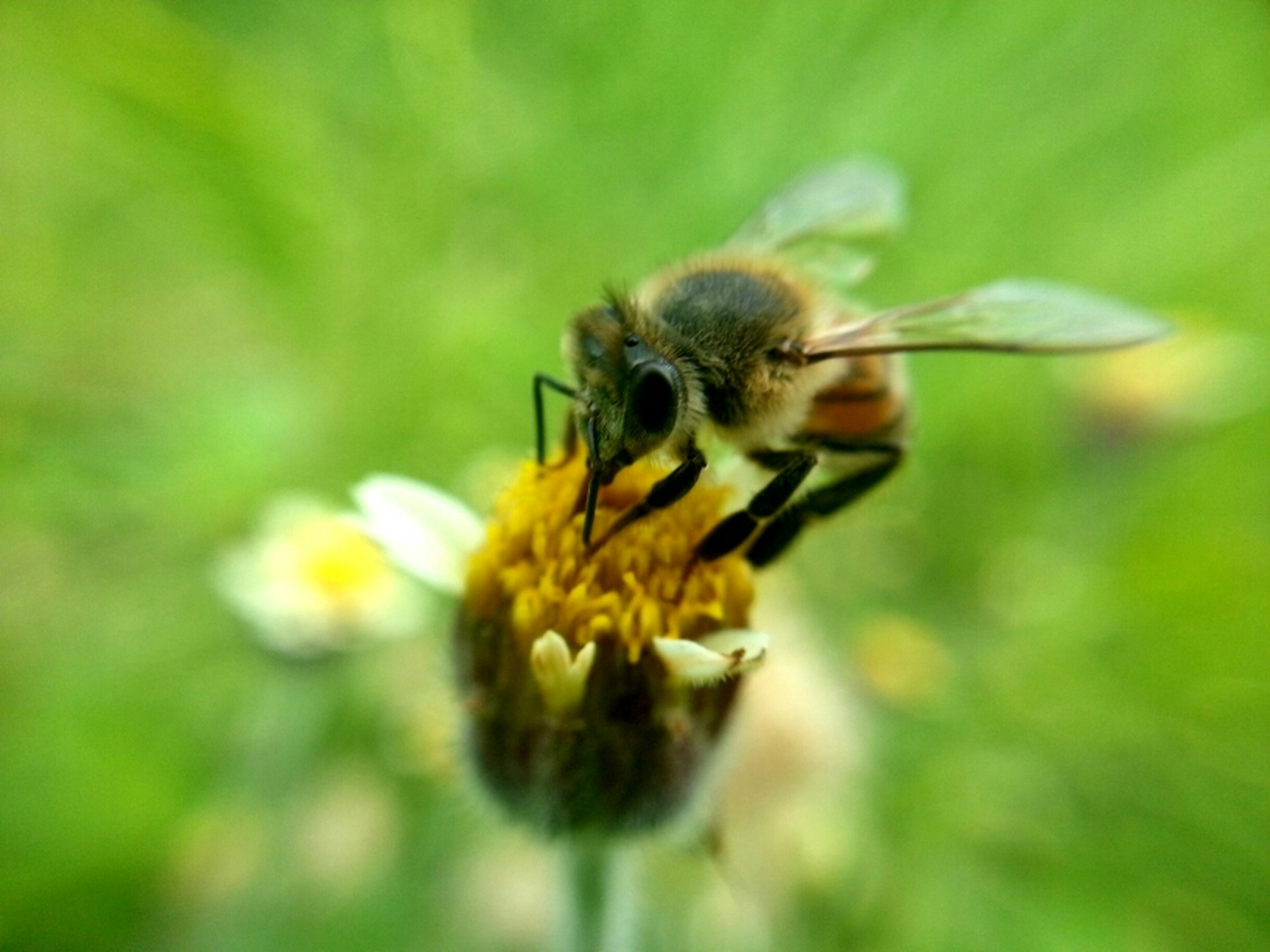 flower, one animal, animals in the wild, insect, animal themes, wildlife, close-up, fragility, flower head, freshness, pollination, petal, focus on foreground, bee, yellow, beauty in nature, nature, growth, selective focus, single flower