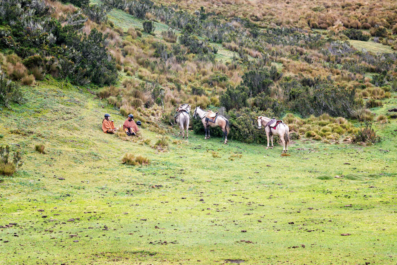 COTOPAXI, ECUADOR - DECEMBER 20: Tourist and guide sitting next to horses near Cotopaxi Volcano in Ecuador on December 20, 2014 Cotopaxi Domestic Animals Ecuador Field Guide Horse Horses Landscape Latacunga Livestock Mammal Man Meadow Nature Nature Tour Tourism Travel Woman