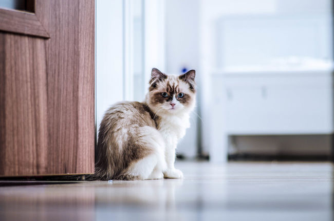 my second cat 😛Animal Animal Eye Animal Head  Animal Themes Animals Cat Day Door Eye4photography  EyeEm EyeEm Best Edits EyeEm Best Shots EyeEm Gallery EyeEm Nature Lover Funny Hello World Home Home Sweet Home Nice Nikon Nikonphotography No People Portrait Small Small Cat