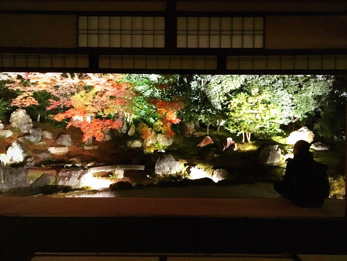 圓徳院 東山 京都 Kyoto Illuminated Kyoto, Japan Relaxing Travel Destinations Autumn Hello World Autumn Colors Enjoying Life Kyoto Autumn Japanese Garden
