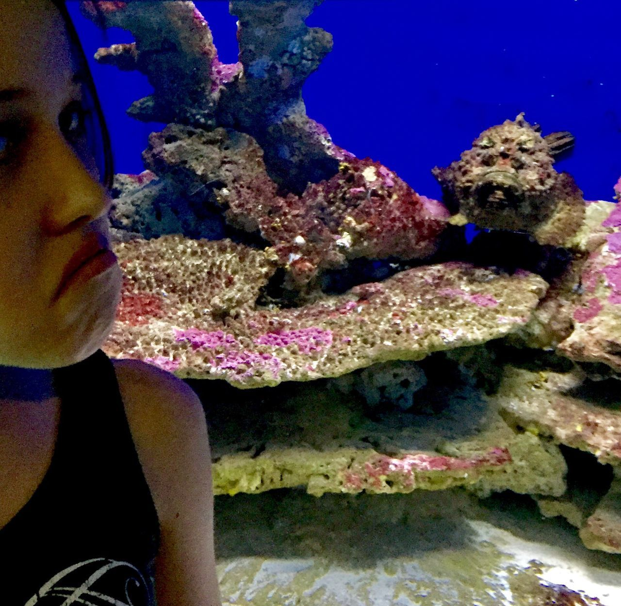 EyeEmNewHere Underwater UnderSea Coral Real People Sea Life Fish Sea Animal Themes Water Nature Animal Wildlife Animals In The Wild One Woman Only Scuba Diving One Young Woman Only Close-up Day People Adult One Person Grumpy Stone Fish Camouflage