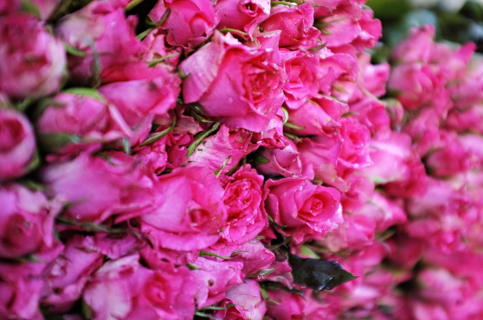 Beauty In Nature Flower Flower Head Fragility Freshness Market Millennial Pink Nature Petal Pink Color Pink Rose Plant Repetition Roses Wet