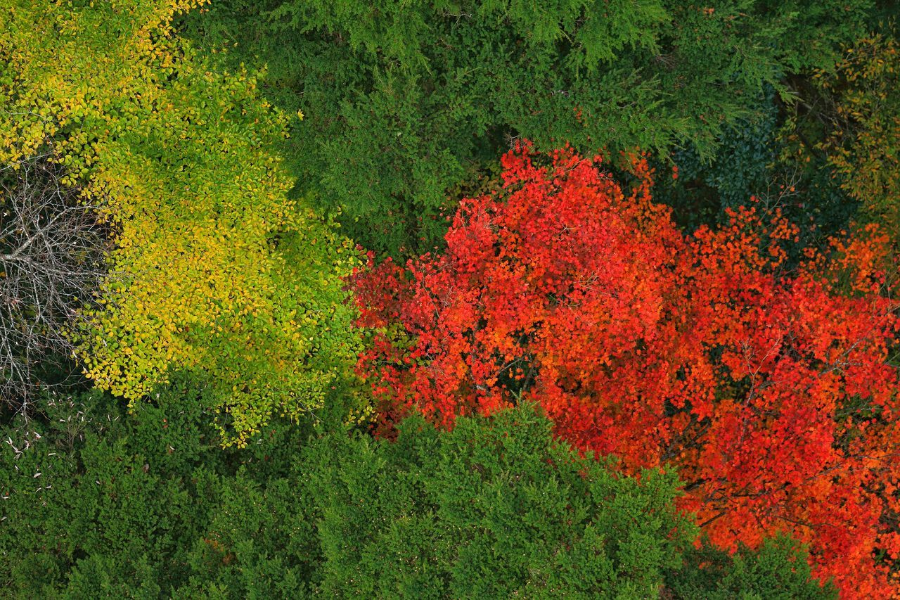 Directly Above Shot Of Trees Growing On Field During Autumn