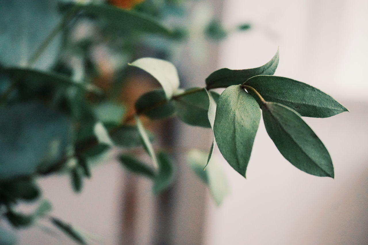green leaves leaf Plant close-up Growth Nature no people day indoors beauty in Nature Freshness Leafs leafs photography leaves Leaves🌿 Green branch Plant Plants