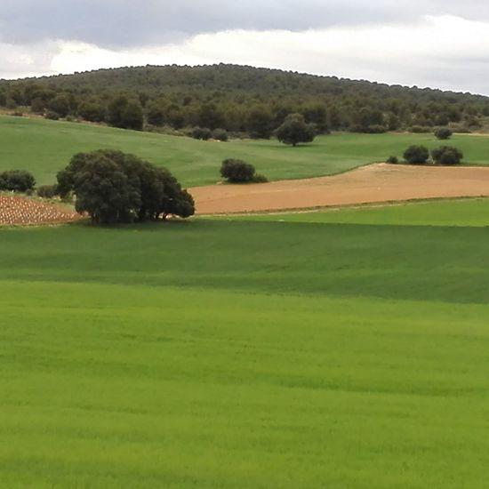 Tarde de primavera el Albacete