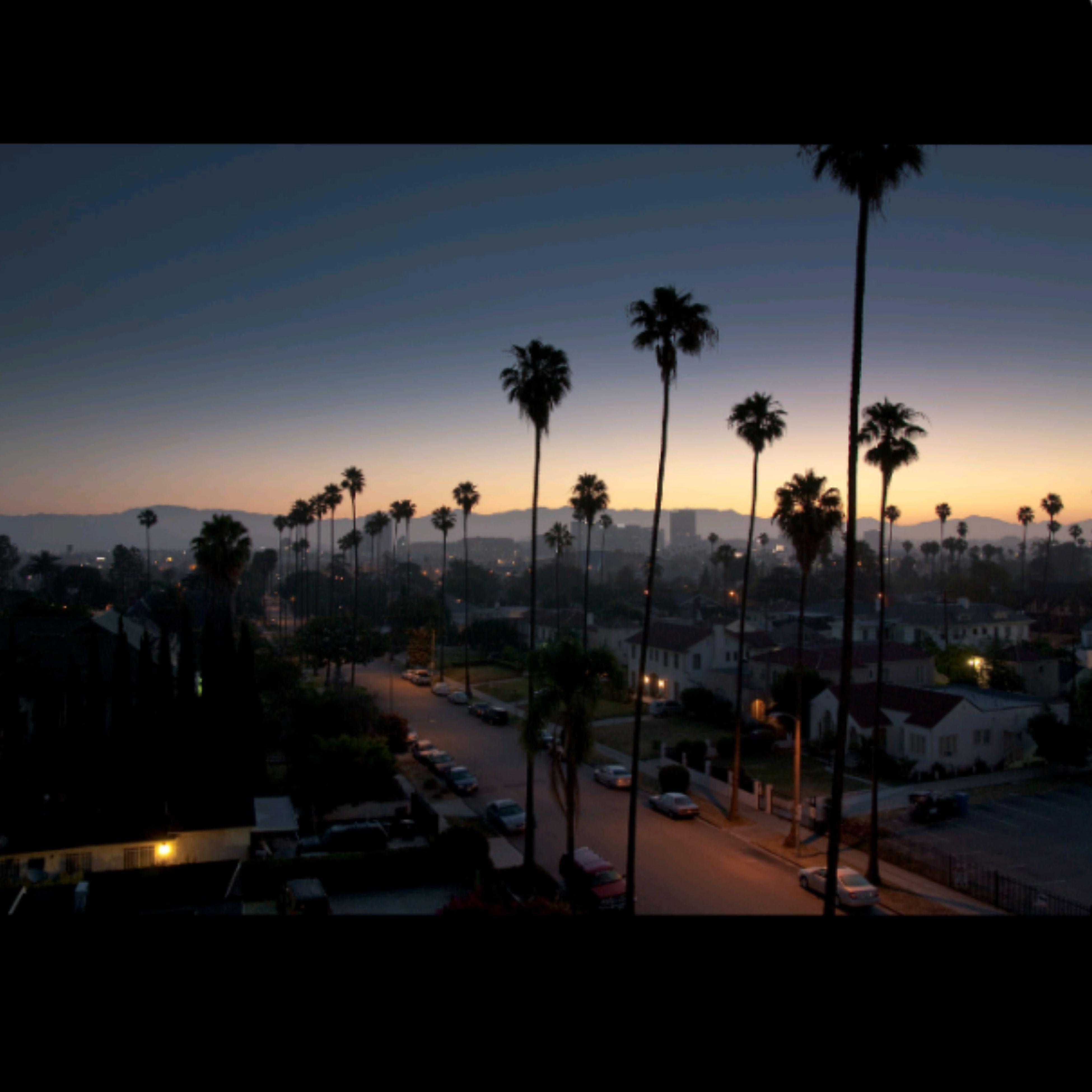 palm tree, sunset, tree, silhouette, transportation, car, sky, mode of transport, road, land vehicle, street light, street, dusk, sea, nature, travel, illuminated, tree trunk, outdoors, growth