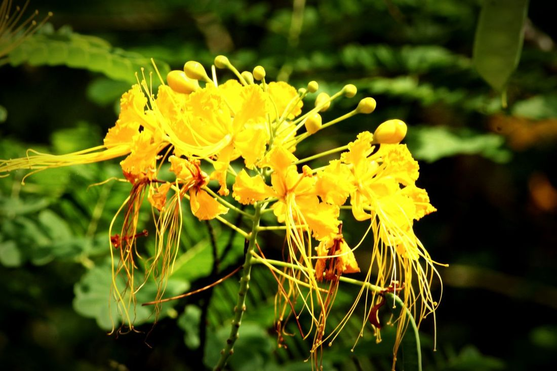 Funny Yellow Blossom.. Flower Yellow Fragility Freshness Growth Close-up Petal Flower Head Stem Focus On Foreground Plant Bud Beauty In Nature Nature Springtime In Bloom Selective Focus Blossom Botany Vibrant Color Flowers Sky Growing Natural Condition Growth