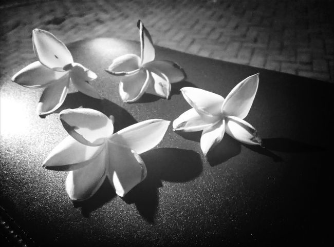 ...four Flowerporn Blackandwhite Floweroftheday EyeEm Best Shots - Flowers