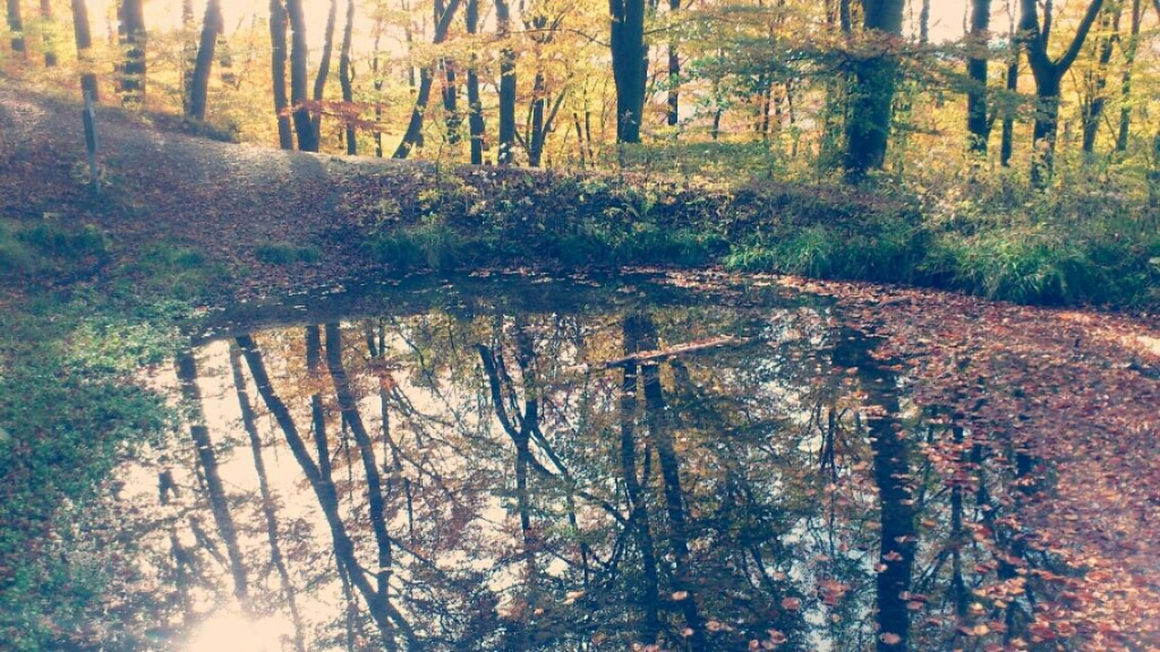 tree, tranquility, tree trunk, forest, tranquil scene, woodland, water, nature, scenics, beauty in nature, reflection, growth, lake, non-urban scene, branch, idyllic, river, sunlight, landscape, outdoors