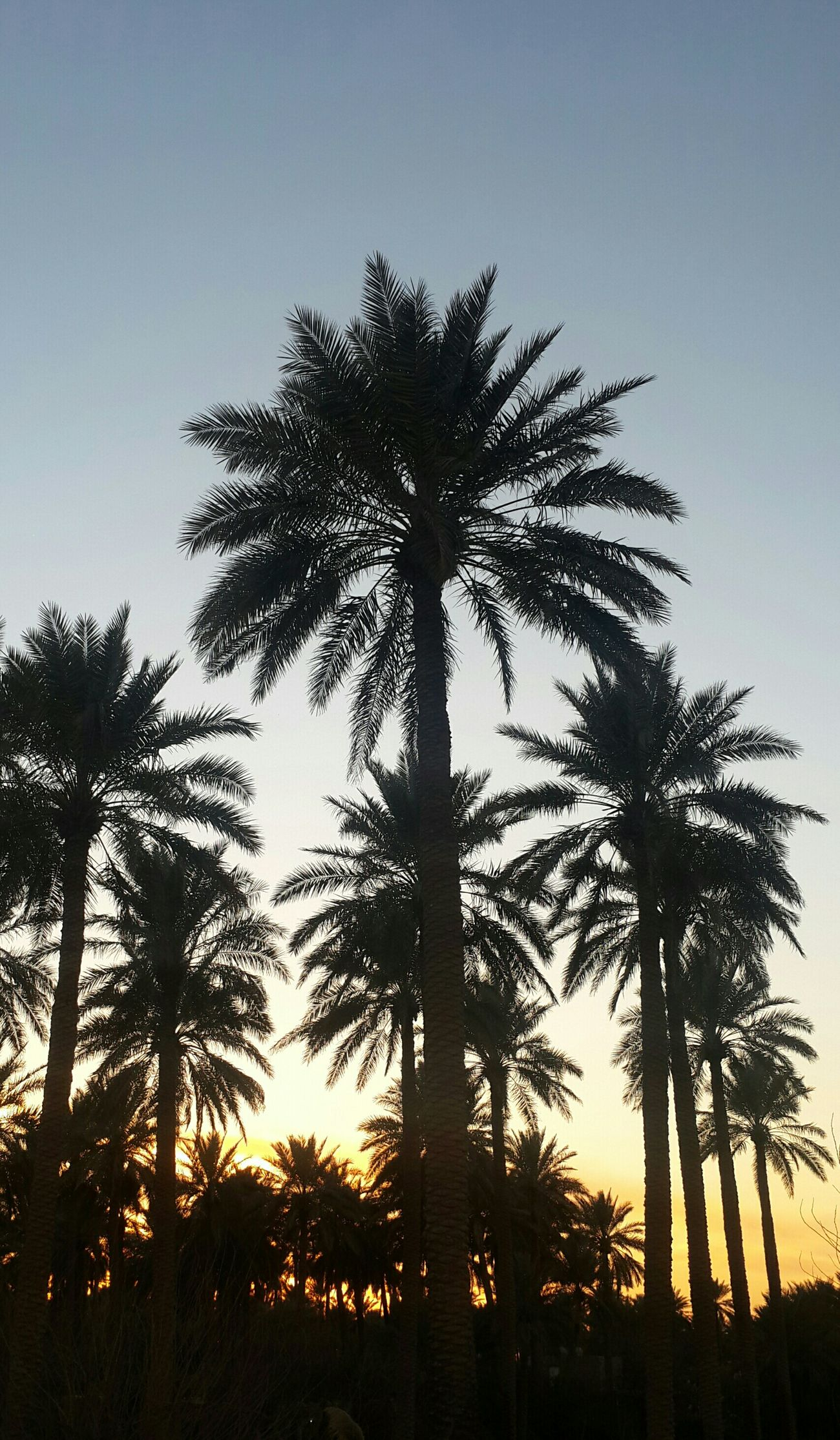 First Eyeem Photo Balm Sunset Spring Feelings غروب الشمس النخيل اتمشى_بالبستان