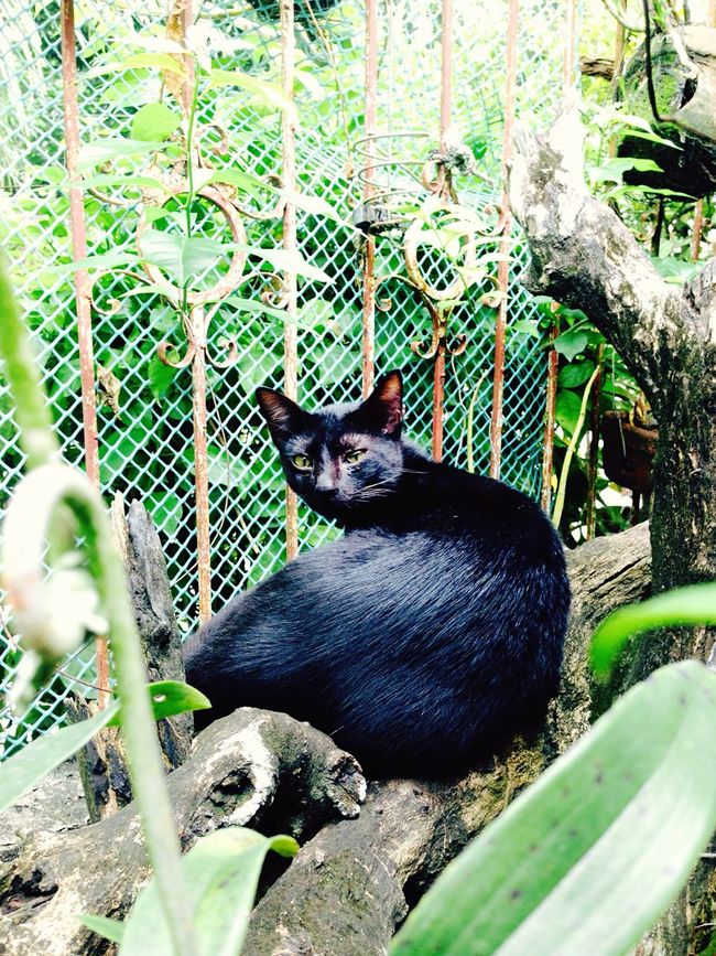 Roaming around on our mini garden when I saw the cat looking at me. BLackCat Cat