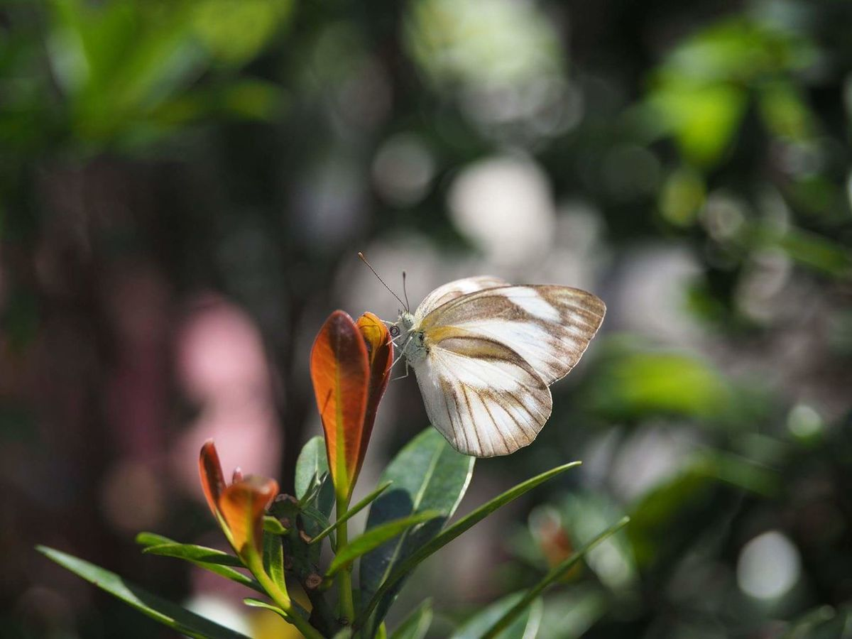 Butterfly Farm Insect Butterfly Garden Butterfly Beauty In Nature Nature Growth Flower Outdoors Butterfly - Insect Animal Themes Wildlife Insect Paparazzi Insect Photography Selective Focus Butterflies Butterfly ❤ Butterfly On Flower Butterfly Resting On Flower