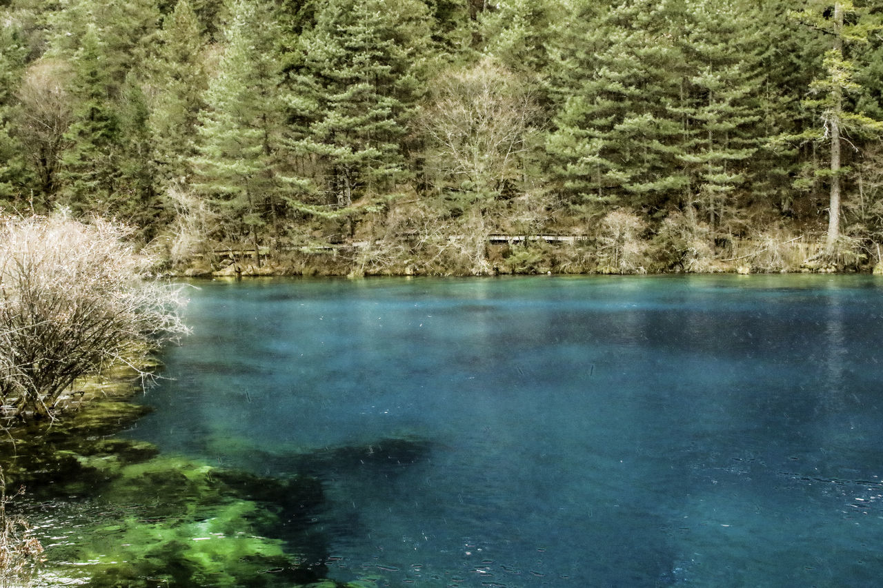 Adventure Beauty Calm China Clean Clear Cold Day Forest Growth Idyllic Jiuzhaigou Lake Nature No People Photography Pond Scenics Sichuan Tourism Tourist Tranquility Travel Tree Water