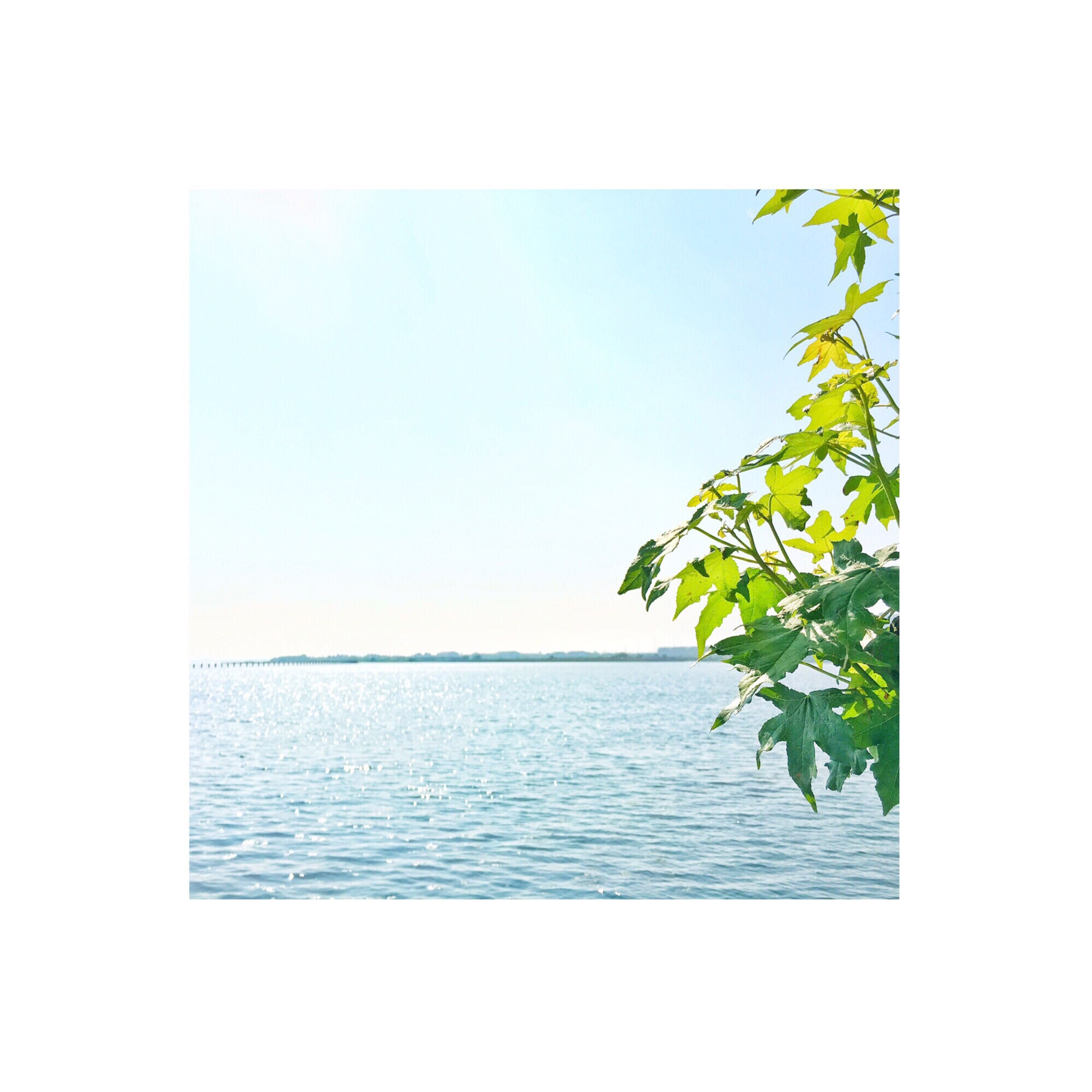 sea, water, horizon over water, clear sky, copy space, tranquility, beauty in nature, tranquil scene, nature, scenics, waterfront, transfer print, auto post production filter, growth, tree, leaf, rippled, plant, sky, green color