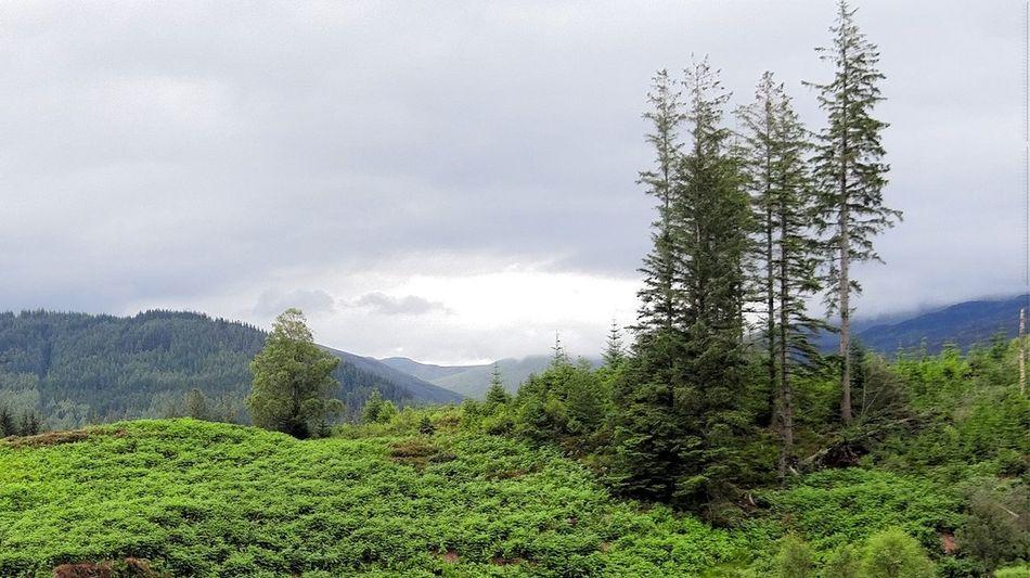 Beautiful stock photos of scotland, tranquil scene, mountain, scenics, tranquility