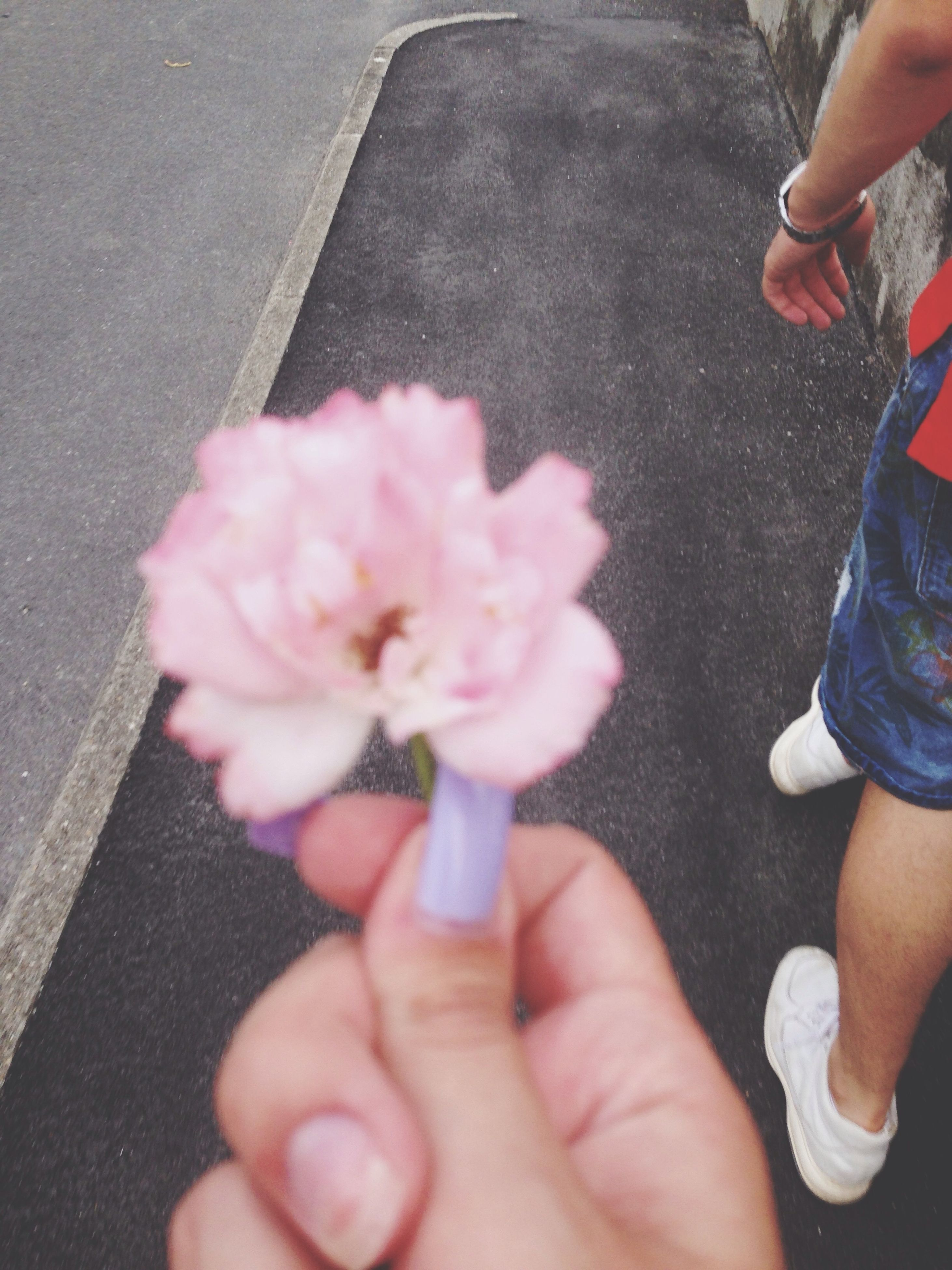 person, holding, part of, flower, freshness, cropped, personal perspective, unrecognizable person, lifestyles, leisure activity, human finger, street, fragility, men, petal, high angle view