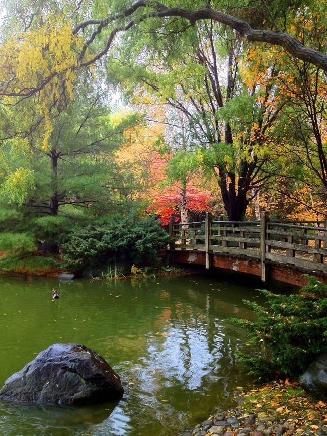 Japanese Park. Mississauga/ Canada