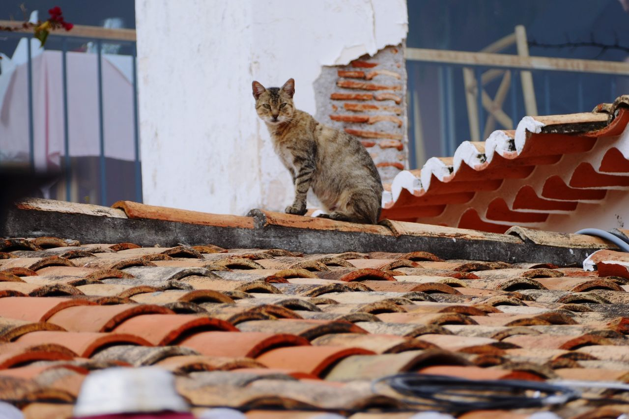 Cat Cats Cat On Rooftop Tiles Chimney