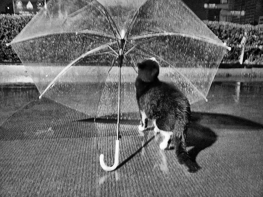 Winter 2016 Animal Photography Weather Rain Photo Nature Photography I Love My Cat ❤ Seoukchon Lake Cats Little Cats Wild Cats Alley Cat A Feral Cat