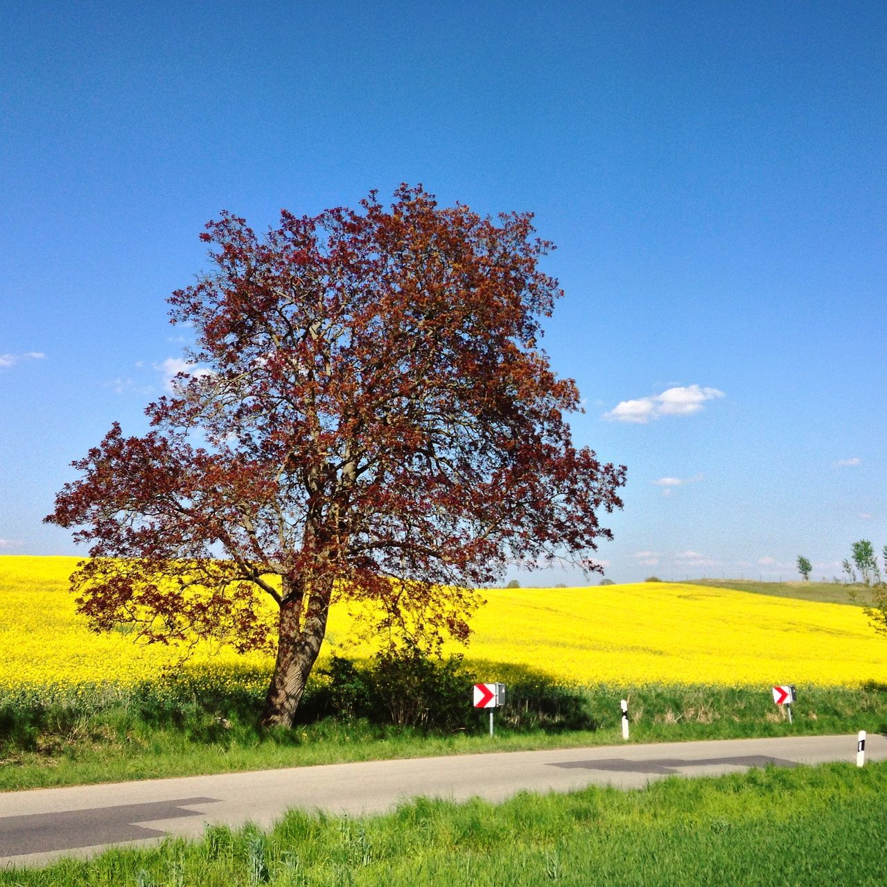 tree, grass, field, nature, growth, landscape, beauty in nature, yellow, sky, scenics, day, tranquility, no people, outdoors, clear sky