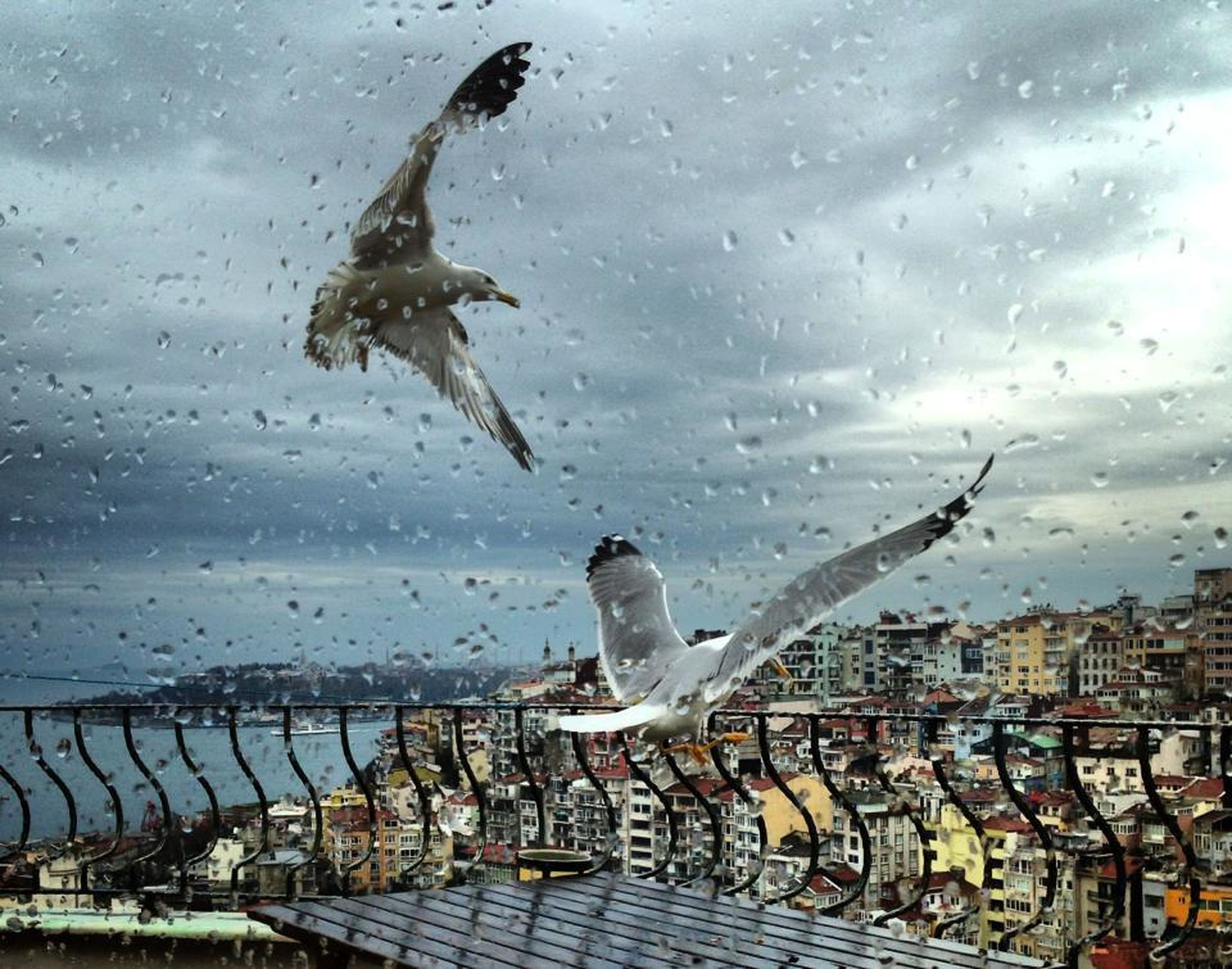 bird, animals in the wild, building exterior, sky, animal themes, built structure, architecture, flying, wildlife, cloud - sky, water, city, one animal, pigeon, cloudy, cloud, spread wings, mid-air, day, cityscape