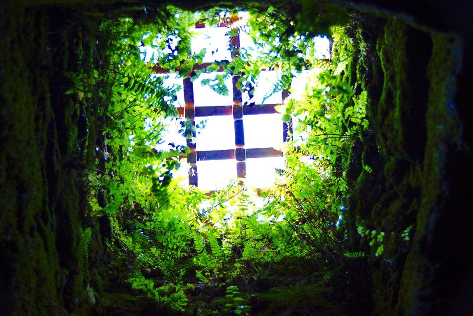Cave Caves Caves Photography Creeper Creeper Plant Day Full Frame Green Green Color Growing Growth Indoors  Jail Lush Foliage Nature Plant Prision Prision Bars Scenics Tranquil Scene Tranquility Tree Window