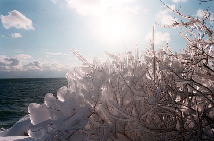 Ice storm Shoot Film Film 35mm 35mm Film Close-up Horizon Over Water Tree Water Growth Cloud - Sky Day Scenics Tranquil Scene Sea Plant No People Outdoors Tranquility Beauty In Nature Sky Nature Ice Ice Storm Lake Lake Ontario Toronto Humber Bay