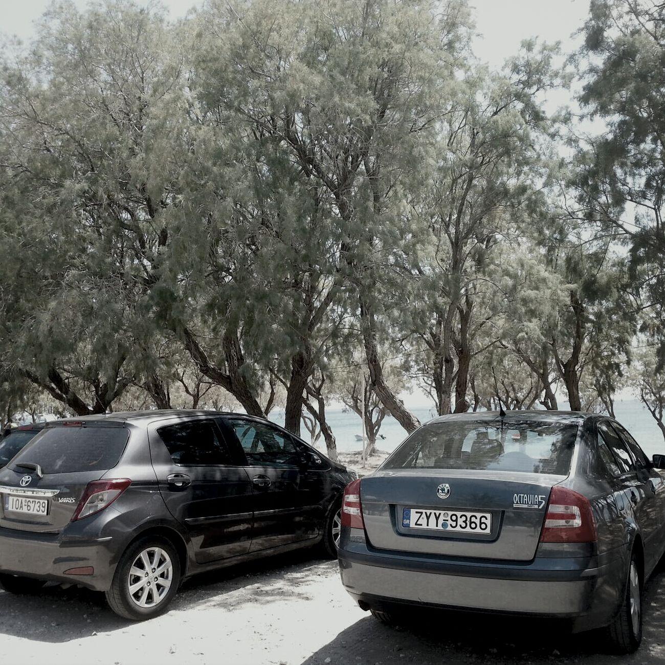 Relaxing Cars Tzip Skoda Octavia