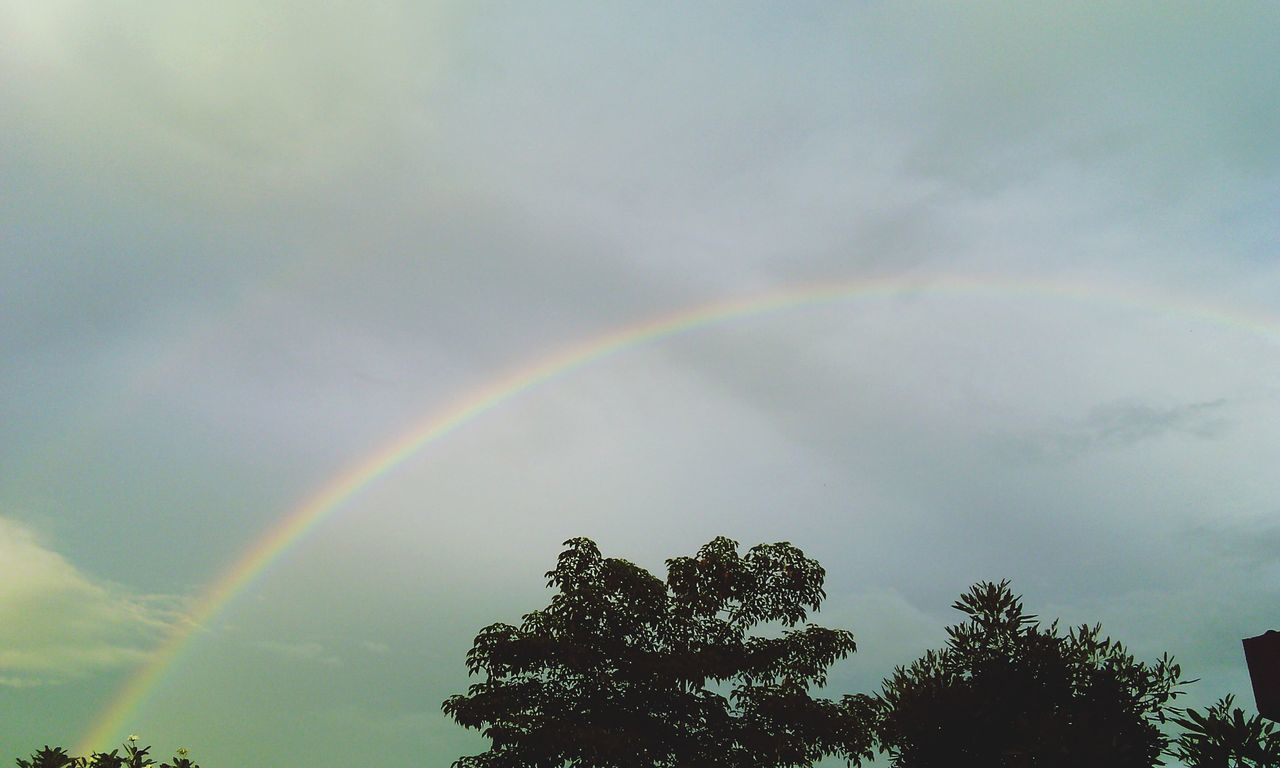 rainbow, double rainbow, tree, scenics, beauty in nature, sky, low angle view, multi colored, nature, no people, outdoors, idyllic, day, tranquility, tranquil scene, natural phenomenon, spectrum, refraction