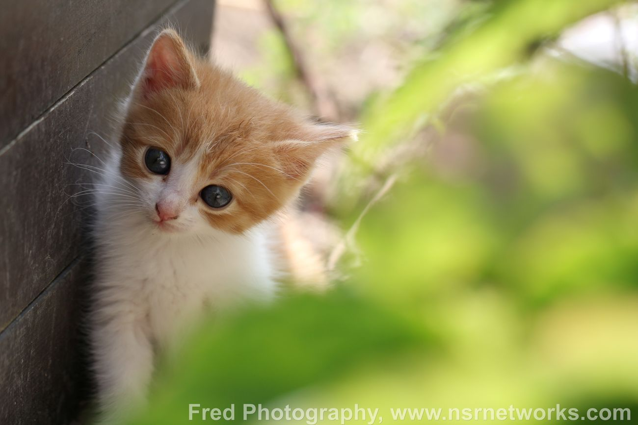 Cat Cat Lovers Cats Chat