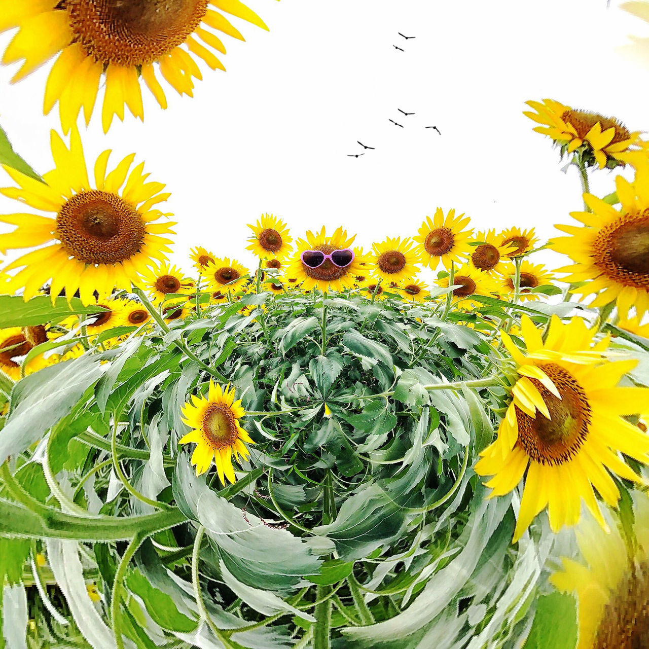 flower, yellow, nature, beauty in nature, growth, petal, plant, freshness, fragility, sunflower, flower head, uncultivated, no people, close-up, outdoors, day, animal themes, blooming