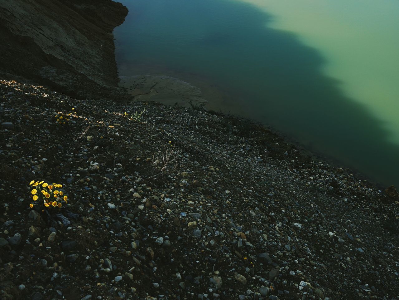 Outdoors Nature Beauty In Nature No People Day Beauty In Nature Freshness Tranquility Flower Yellow Flowers Light And Shadow Water Green Water