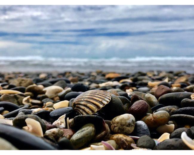 Shelley Beach Beachphotography Shells NSW Australia Shells🐚 Nature Localbeaches Shelleybeach Iphonephotography Photography Exploring