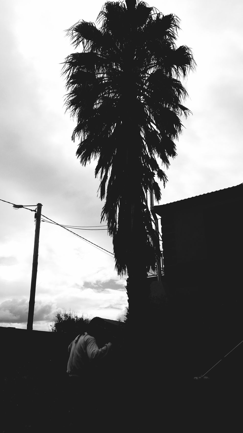 Palm Tree The Headless Man Garden Sky Cloud - Sky Scenics Beauty In Nature